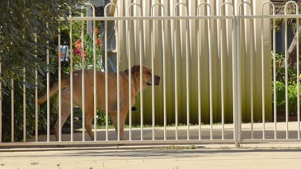 RSPCA and City of Bunbury rangers have removed a dog from the South Bunbury home of baby Gammy's alleged biological ...