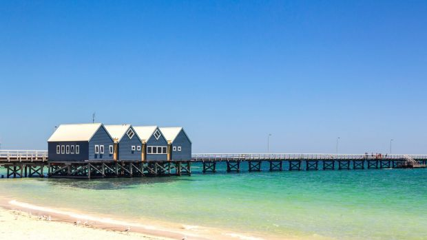 """The Busselton jetty is under threat from """"termites of the sea""""."""