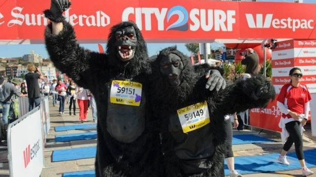 Rob Stanley-Jones, dressed in a gorilla suit in a previous City2Surf.