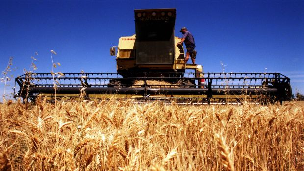 Feeling the pinch: Wheat prices have been hammered by booming global production.
