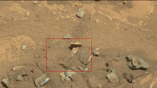 Alien thigh bone? NASA says highly unlikely.