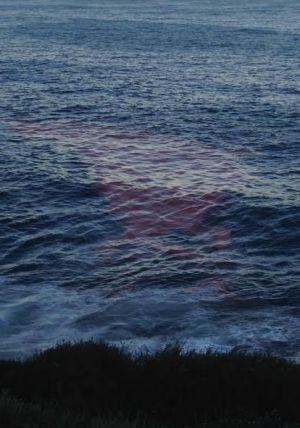 Red tide near Bronte, Sunday evening.