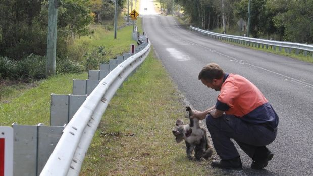 Two years ago, fed-up resident Darren Mewett retrieved a dead koala from the side of the road.