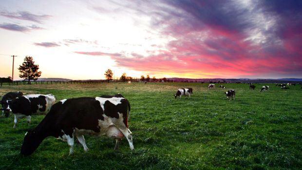 World milk prices have softened in past months as New Zealand, Europe and US recover from drier weather in the previous year.