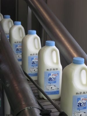 Milking it: A2 is ramping up its activity in the US and China.