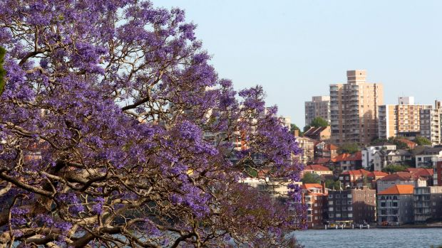 The risk that residents will use the excuse of bushfire protection to remove a tree that obscures a harbour view is real.
