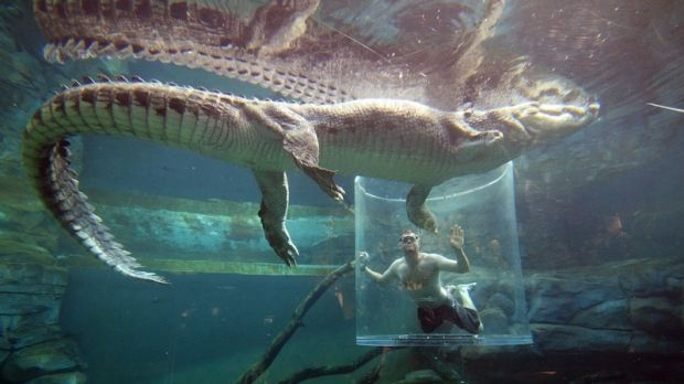 Never smile at a crocodile? Well, here's your chance from the cage of death.