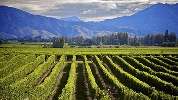 Some wineries based in New Zealand's Marlborough region have gone into receivership as Australian chardonnay makes a ...