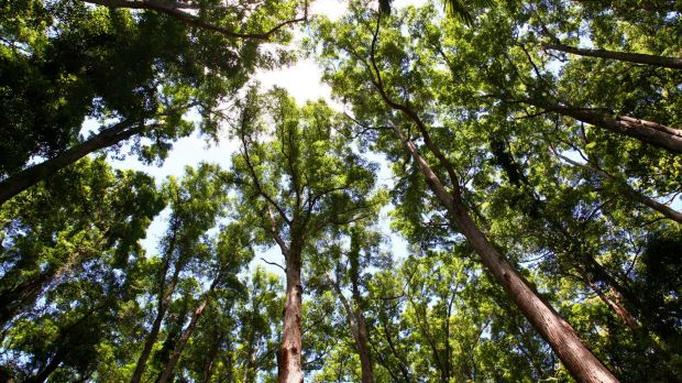 Deforestation is at the centre of an argument in Paris that could affect how Australia meets its emissions target.