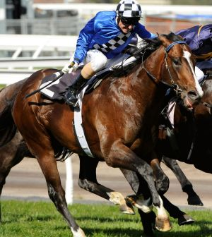Merion, Steven Arnold up, (right) defeats Chivalry (Glen Boss up) in the Living Legends Stakes at Flemington on Saturday.
