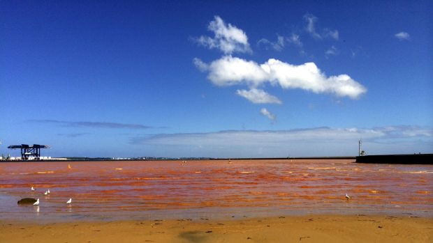 The orange plume that invaded Foreshore Beach at Port Botany in February.