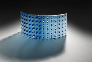 Xylem Section, by Matthew Curtis.