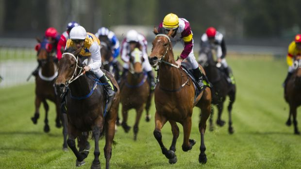 The ATO expects to receive 100,000 records on asset classes including including thoroughbred horses.