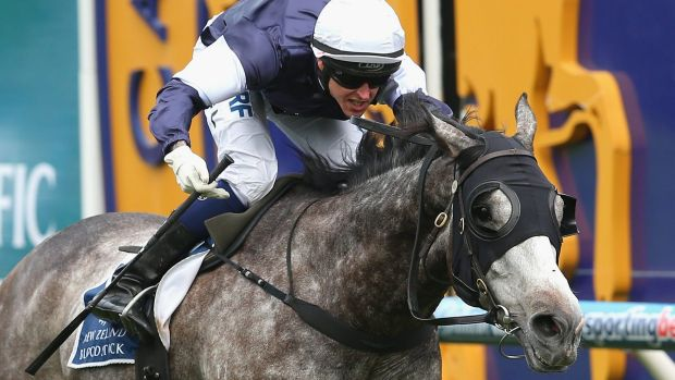 Fawkner has all the credentials of a modern-day Cup winner.