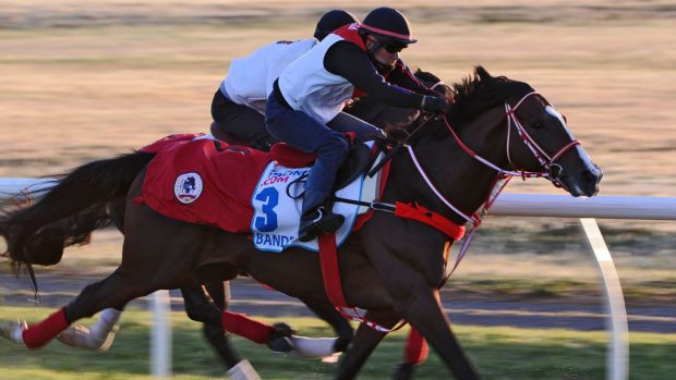 Bande, from the Yoshito Yahagi stable in Japan, gallops on the course proper during a trackwork session at Werribee.