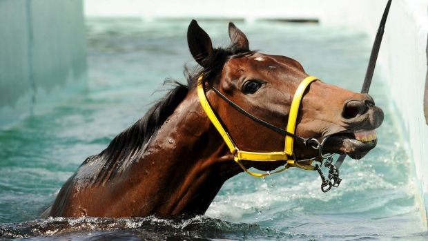 Offering a smile: Gai Waterhouse's cups hope The Offer takes a dip at Flemington.