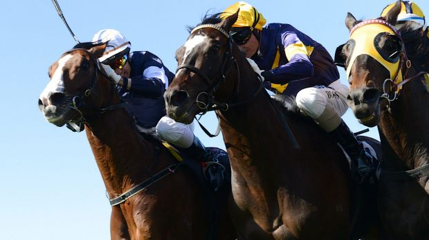 Into action: Araldo (centre) has gained a start in the Caulfield Cup.