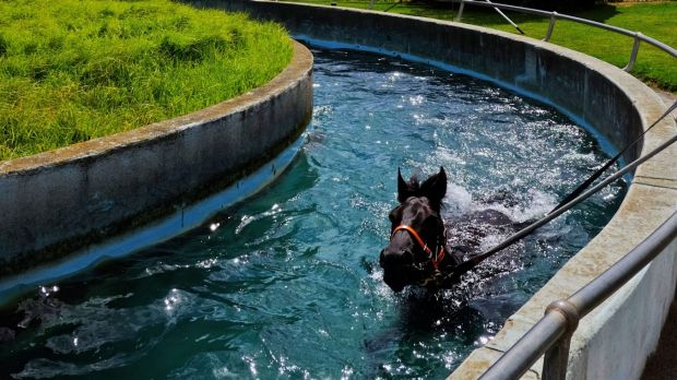 Going swimmingly:  Caulfield Cup favourite Lucia Valentina takes a dip.