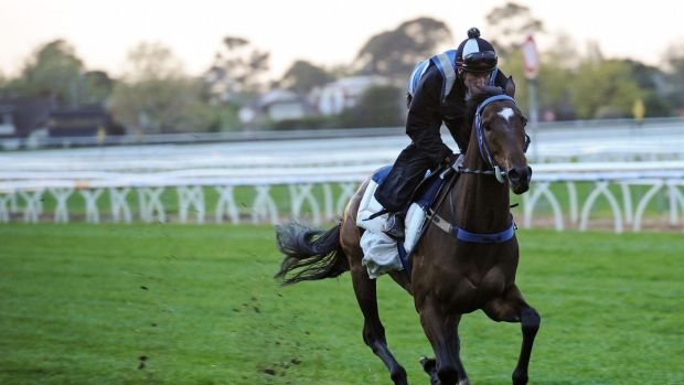 In the mix: One-time emergency Peter Moody's Lidari is now among the most fancied runners for the Caulfield Cup.