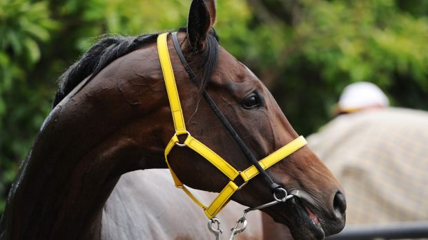 The Offer will be inspected at Caulfield on Saturday once he arrives at the track, three hours before the Caulfield Cup.