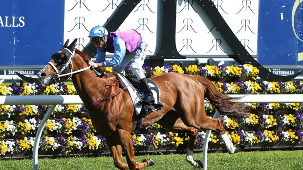 Heady ride: Blake Shinn on Mulaqen.