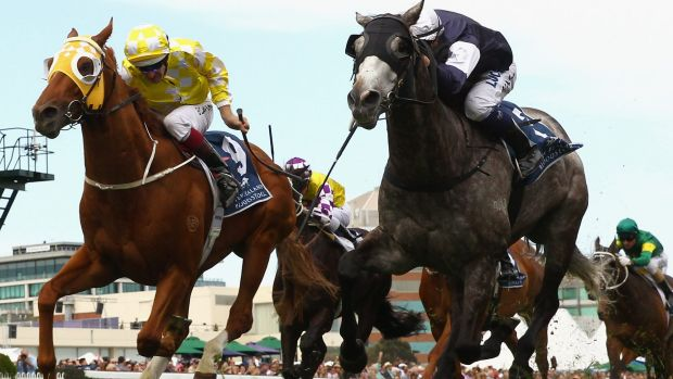 In the bloodlines: Fawkner, at right, is favourite for the Cox Plate after winning the Caulfield Stakes from Criterion.
