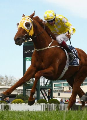 Costly suspension: Bowman riding Criterion to the line to win the Cathay Pacific Caulfield Stakes.