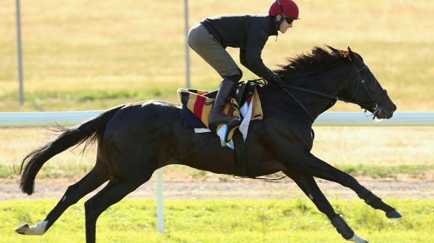 Coolmore's Adelaide will see Moonee Valley for the first time on Saturday.