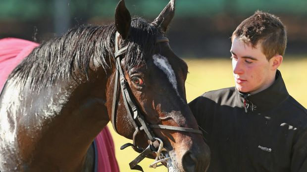 Up to the challenge: Adelaide with strapper David Bergin at Werribee.