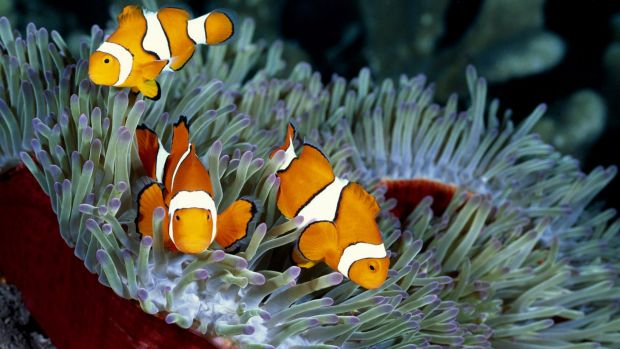 "No clowning around: Greater Barrier Reef is a ""significant concern""."