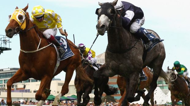 Grey deceiver: Fawkner holds off the fast-finishing Criterion in the Caulfield Stakes.