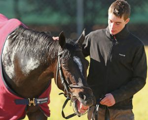 Adelaide is poised to change the fact that no internationally trained horse has won the Cox Plate.