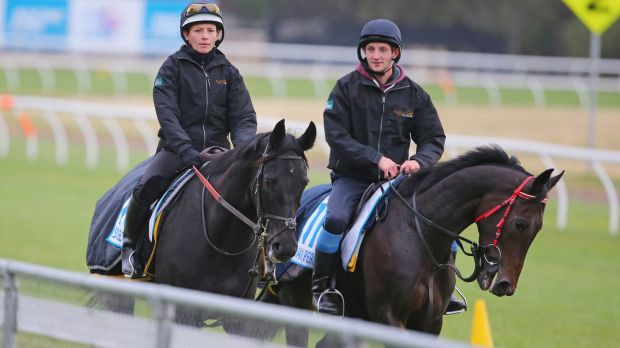 OTI Racing is desperate to qualify Lord Van Percy (right, seen at Werribee with Side Glance) for the Melbourne Cup.