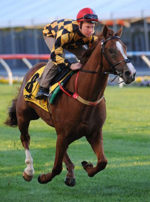 Tommy Berry, seen here riding Woodbine during Breakfast With The Best Track Gallops at Moonee Valley on October 21, will ...