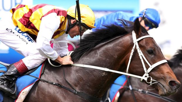 Nothing in it: A fast-finishing Preferment just misses out in the Geelong Classic.