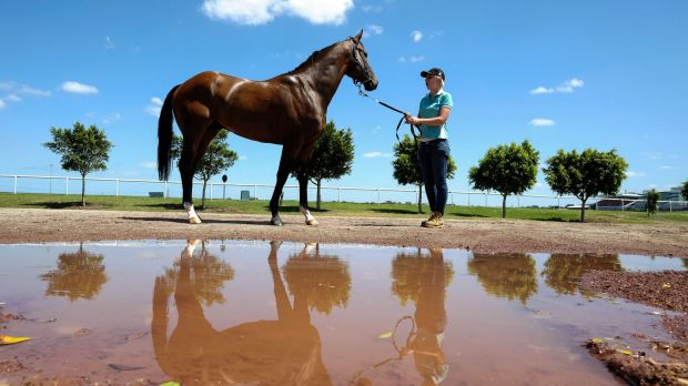 Strapper Alex Hansford-Smith poses with Victoria Derby favourite Hampton Court at Flemington on Wednesday.