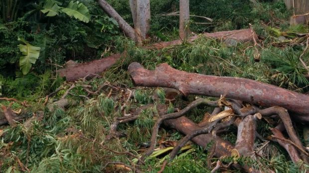 Clearance: New bushfire laws allow home owners in certain areas to clear trees without approval and are being abused, ...