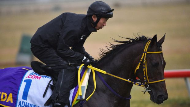 On course: Admire Rakti from Japan gallops during a trackwork session at Werribee Racecourse.
