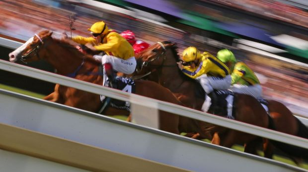 Picking a winner: there are no rules with the Melbourne Cup.