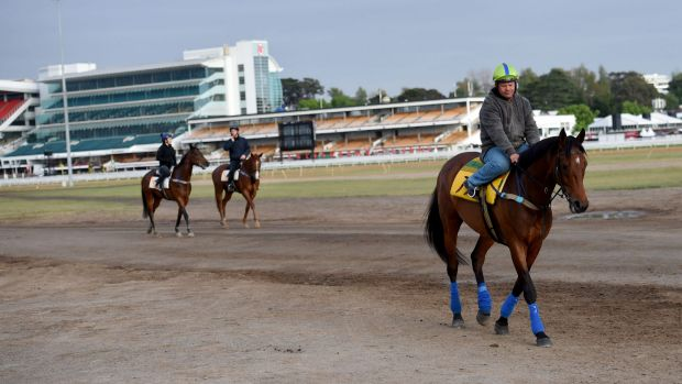 Precedence walks back to the stables after a trackwork session on Monday.