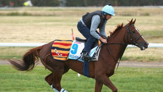 English raider: Red Cadeaux works on Victorian soil.