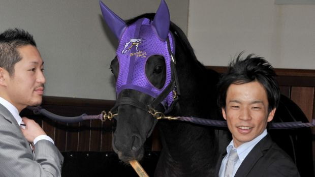 Tragic end: Favourite Admire Rakti of Japan relaxes in its stable with handlers at Flemington Racecourse. The horse ...