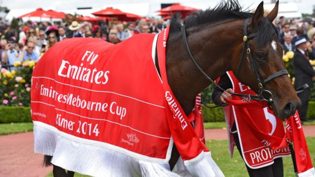 Favourite for 2015: Protectionist after his Cup win.