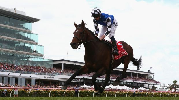 Protectionist: Vets and breeders have rejected suggestions thoroughbreds are bred without concern for their welfare.