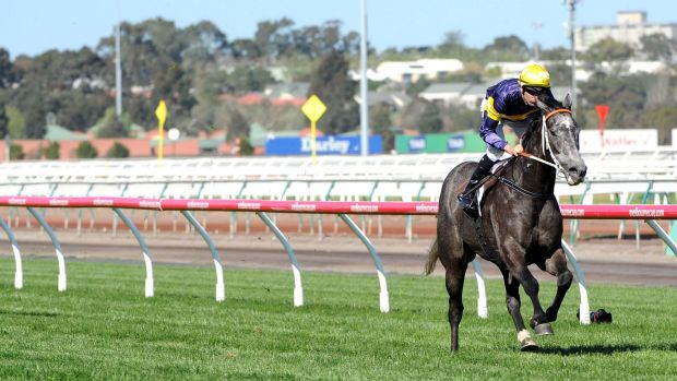 Spring king: Rupert Legh's Chautauqua is firming as a favourite for the Darley Classic.