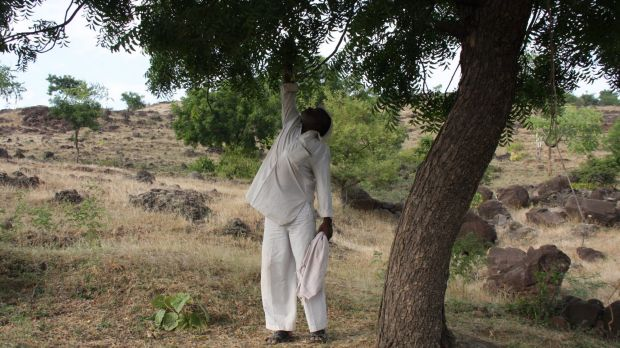 Scene of death: Nitin Aage's father, Raju, points to the tree branch from which his son was hanged.