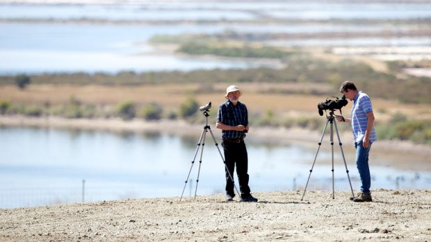 Birdwatchers haven: Dr David Boyle and Barry Lingham (right) of the Geelong Field Naturalists Club, are annoyed by plans ...