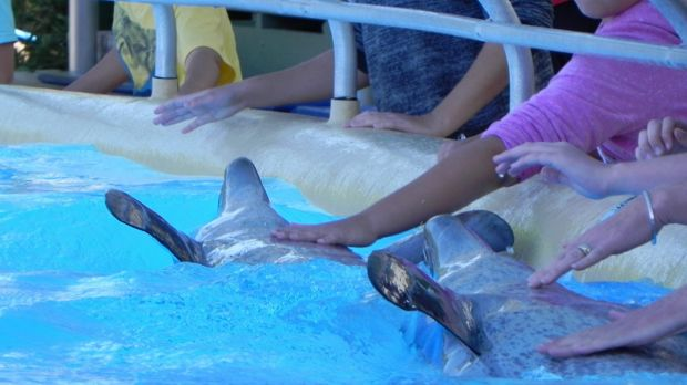 Staying in touch: Spectators get up close with bottlenose dolphins Bucky and Zippy at Dolphin Marine Magic in Coffs Harbour.