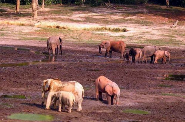 "Human: ""Elephants of mixed ages standing in a muddy landscape."" Model: ""A herd of elephants walking across a dry grass ..."