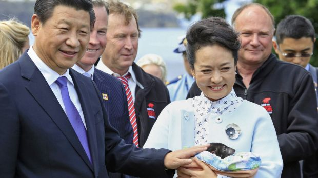 Meet and greet: President Xi Jinping and his wife, Peng Liyuan, have a close encounter with a Tasmanian Devil during ...